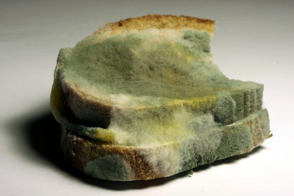Nobody Likes Moldy Bread